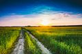 Sunset, sunrise, sun over rural countryside wheat field and road
