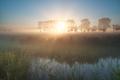 misty summer sunrise on pasture