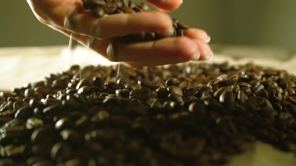 Download Beautiful Woman Hand Taking Some Coffee Beans nulled download