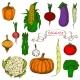 Bright Vivid Organically Grown Vegetables Sketches