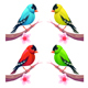 Group of Birds in Different Color Tones