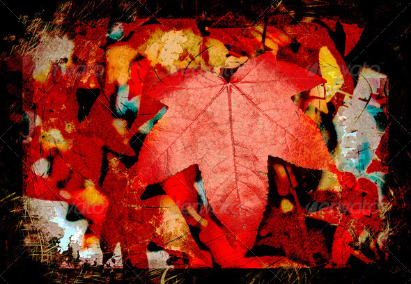 red autumn leaf - Stock Photo - Images