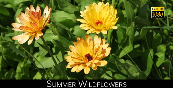 Download Summer Wildflowers nulled download