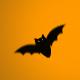 Flying Bats - ActiveDen Item for Sale