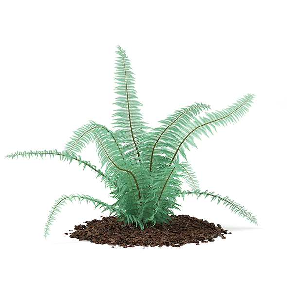 Fern (Dicksonia antarctica) - 3DOcean Item for Sale