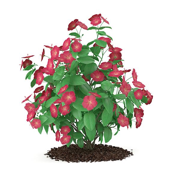 Hibiscus Flowers (Hibiscus rosa-sinensis) - 3DOcean Item for Sale