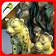 Vine Cheetahs