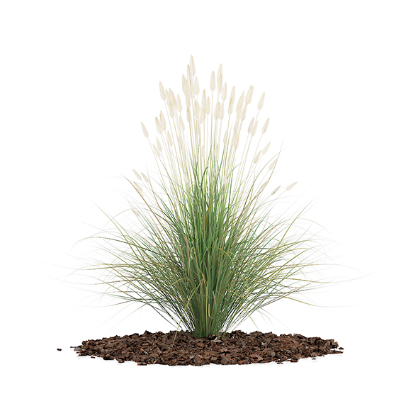 Ornamental Grass - 3DOcean Item for Sale