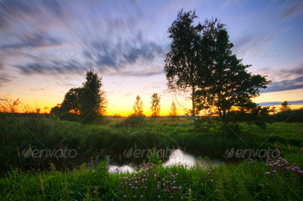 Sunset in summer field - Stock Photo - Images