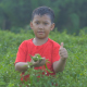 Boy Holding Chili And Thumb Up In Chili Garden