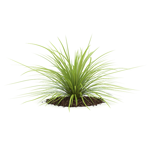 Yucca Plant (Yucca baileyi) - 3DOcean Item for Sale