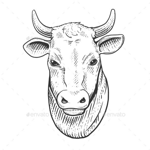 Cow Head Engraving Style Vector Illustration