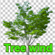 Tree in the wind - VideoHive Item for Sale