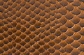 Brown snake skin background - PhotoDune Item for Sale