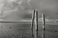 B&W of posts in water.