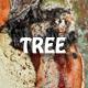 Tree Bark Texture 4 3D
