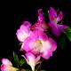 Flower Blossoming