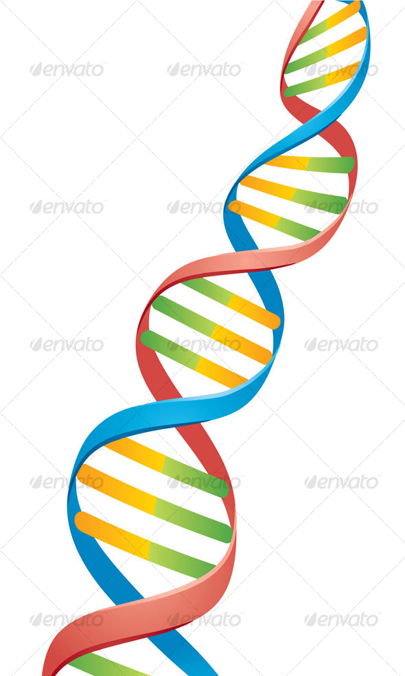 GraphicRiver Double Helix DNA Strand 65979