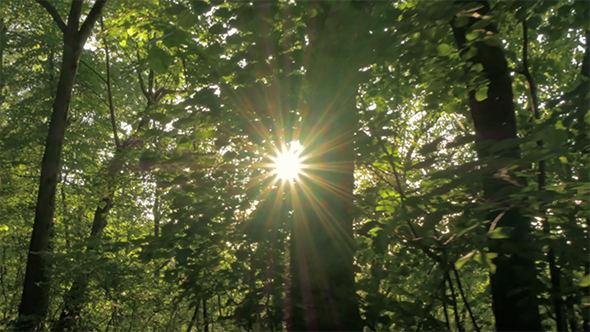 Download Sun Rays in the Green Forest 1 nulled download