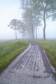 bike path between trees in fog