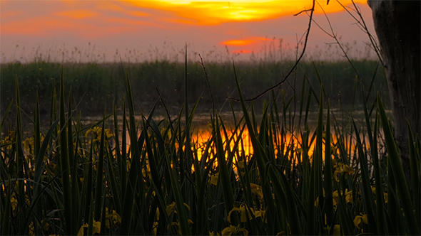 VideoHive Sunset at the Swamp 1 17017658