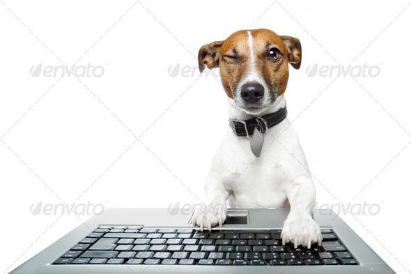 Dog winking using a computer - Stock Photo - Images
