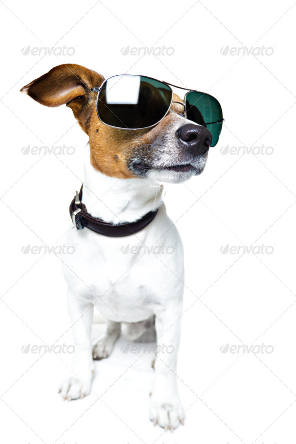 Dog police - Stock Photo - Images