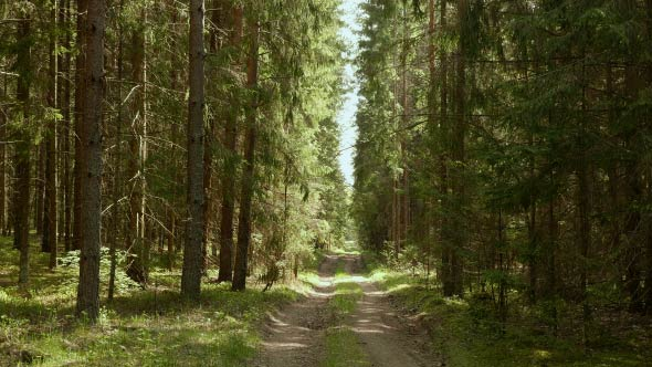 Download Forest Path nulled download