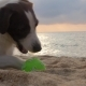 Owner And Happy Dog Playing With Ball At The Beach
