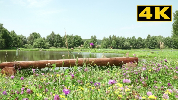 Download Empty Bench By a Pond, Surrounded By Forests And Fields On a Sunny Day nulled download