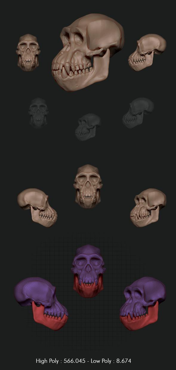 chimpanzee skull - 3DOcean Item for Sale