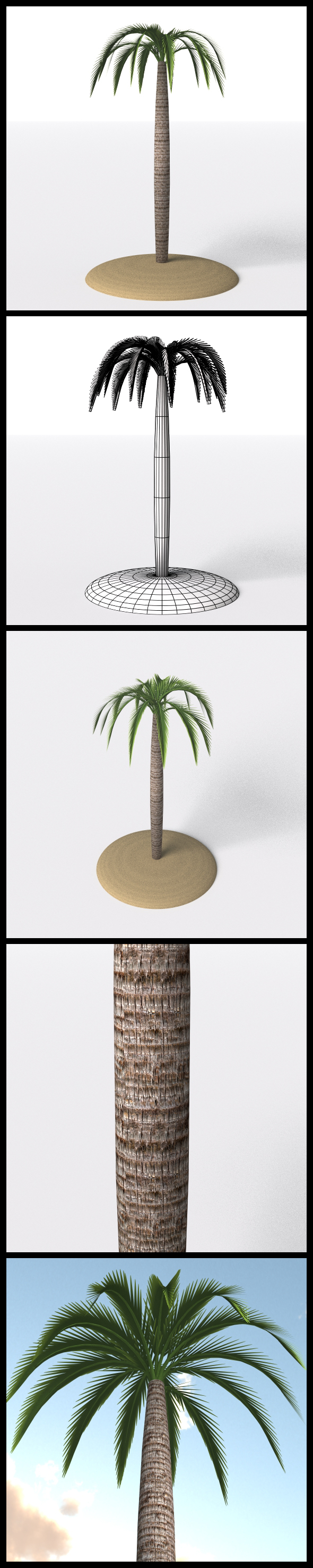 Palm Tree - 3DOcean Item for Sale