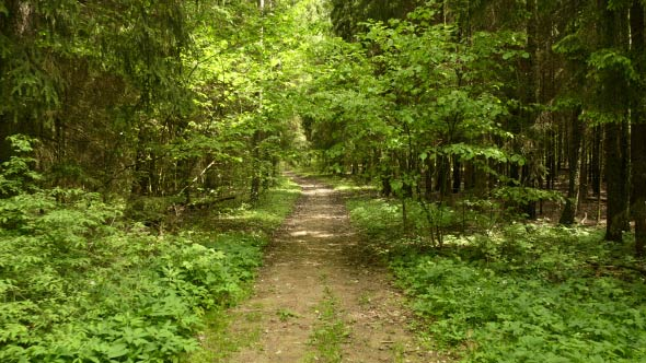 Download Pathway in the Park nulled download