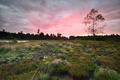 rainy sunrise over forest meadow
