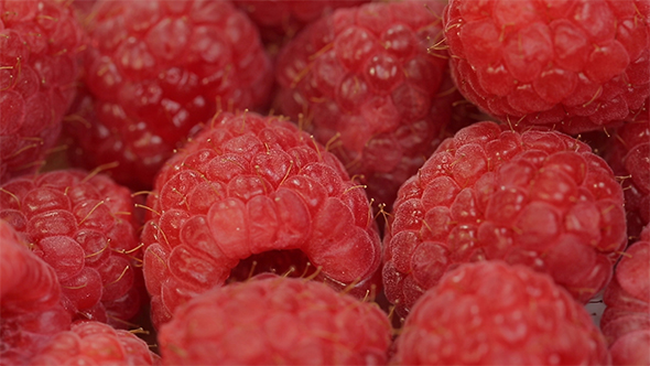 Download Raspberry nulled download