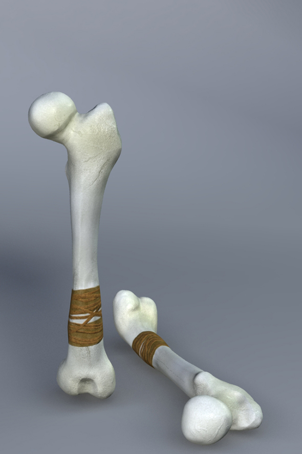 3DOcean Low Poly Bone Club Maya mb OBJ FBX & Textures 17211630
