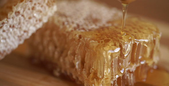 Download Dripping Honey Dipper nulled download