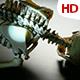 Human Skeleton 0234