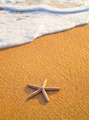 Star Fish on the Beach - PhotoDune Item for Sale