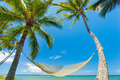 Tropical Palm Trees and Hammock - PhotoDune Item for Sale