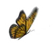 3D Butterfly - VideoHive Item for Sale