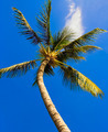 Palm - PhotoDune Item for Sale