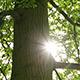 Sunbeams Tree - VideoHive Item for Sale