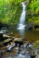 Beautiful Lush Waterfall in Hawaii - PhotoDune Item for Sale