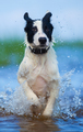 Bathing Puppy
