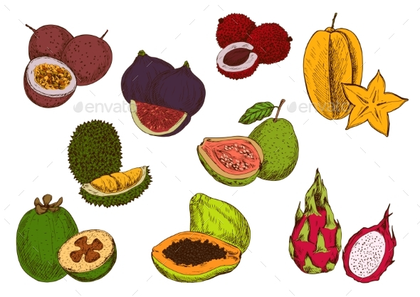 Fresh Tropical Fruits Sketch Icons