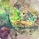 Download Watercolor Motion Kit from VideHive