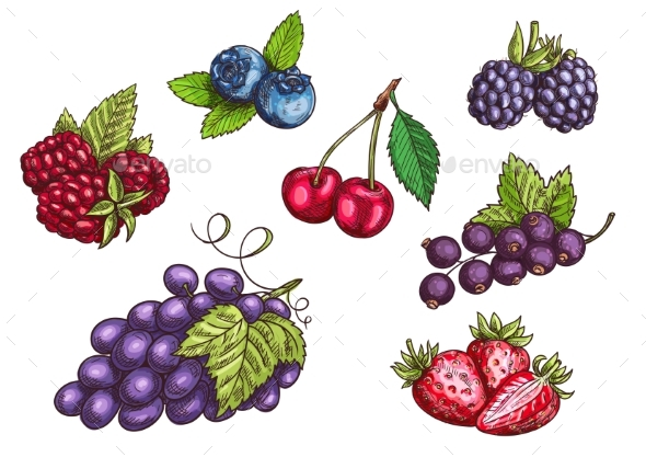Berries Fruits Set, Color Sketches