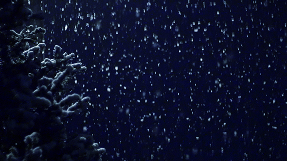 Snow Falling Slowly and Christmas Tree