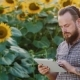 Attractive Bearded Farmer Working With The Tablet. Against The Backdrop Of a Field Of Sunflowers